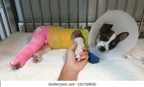 human hand holding a paw of sick dog wearing plastic protective collar with colourful bandage lying inside the cage at animal shelter after sugery operation.