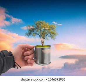 Human hand holding perfect growing tree plant at clouds in a metal cup on sky background.