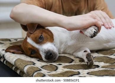Human hand massaging dog