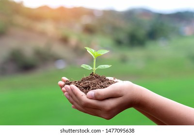 Human hand nurturing young baby plants growing in germination sequence on fertile soil green background