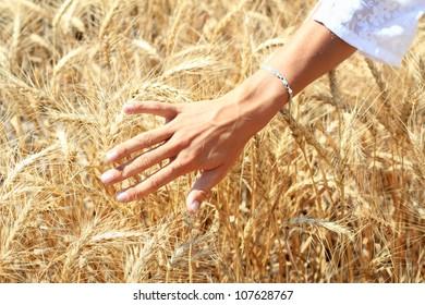 Human hand over ripe wheat