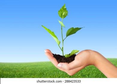Human Hand, Plant, Growth.