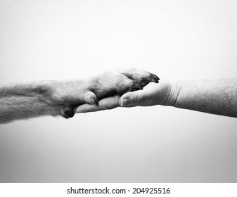 human hand and rottweiler dog paw