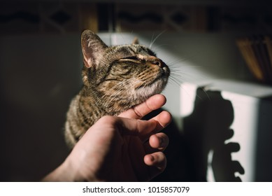 Human hand stroking a tabby cat at home
