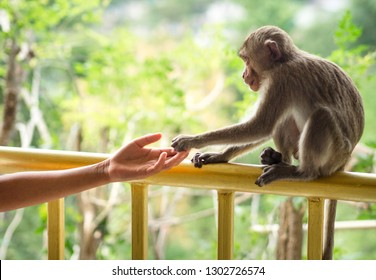 Human hand touching little monkey's paw at Temple in Saraburi, Thailand. Human shake hand with animal. Connection and protection concept. Giving trust, love, care and friendship. Wildlife - Image