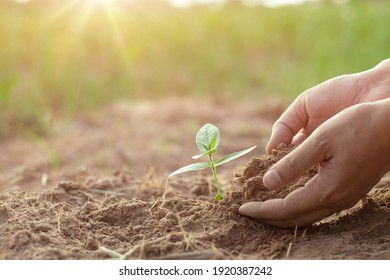 Human hand-grown young plants that are providing fertile soil for good future growth.