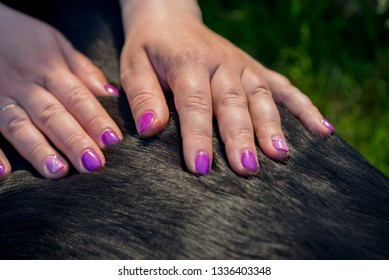 Human hands doing dog massage. Closeup shot.