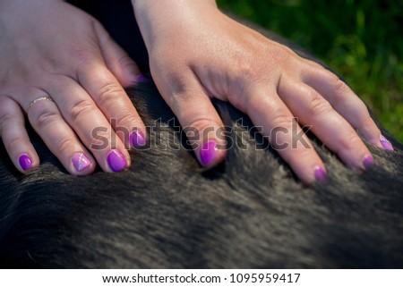 Human Hands Doing Dog Massage Closeup Stock Photo Edit Now
