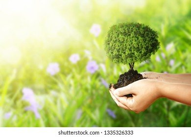 Human hands holding fertile soil with young tree over green park background. Earth hour concept