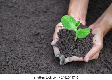 Human hands holding fertile soil and young tree, Planting trees to reduce global warming, environment Earth Day, Forest conservation concept