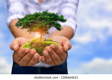 Human hands holding green plant over nature background.Saving world natural environment and sustainable ecosystem with tree planting on volunteer's hand. Environment. Ecology concept.