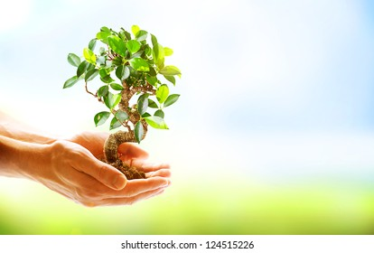 Human Hands Holding Green Plant Over Nature Background. Environment. Ecology Concept