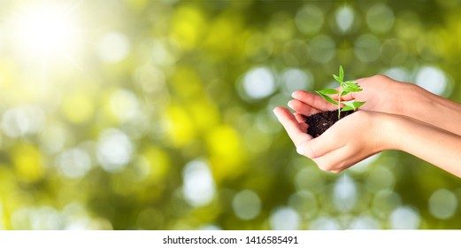 Human hands holding green plants on bokeh background