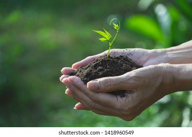 Human hands holding green small plant for life and ecology concept.