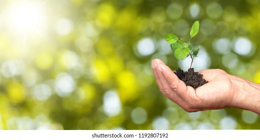 Human hands holding plants