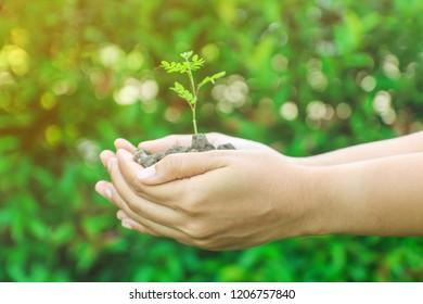 Human hands holding a small green plant on the green background of the nature.
