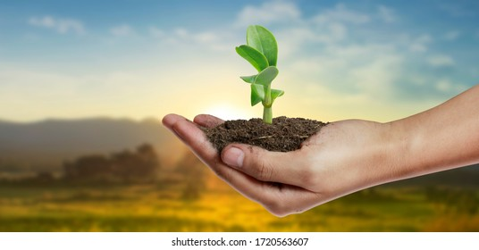 Human hands holding sprout young plant.environment Earth Day In the hands of trees growing seedlings