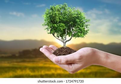 Menschliche Hände mit Sprossenjungen Pflanzen.Umgebung Erde Tag In den Händen von Bäumen Anpflanzungen