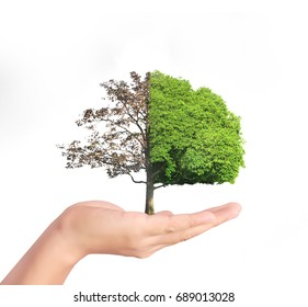 human hands holding a tree sprout