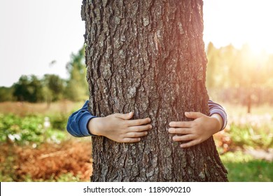 Human hands hug, wrap a tree. Contact man and nature, the concept of ecology. Productivity. Symbiosis