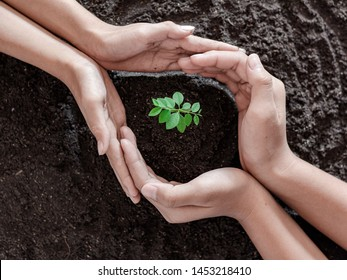 Human hands are planting seedlings into the soil. children hands was gently encircled.