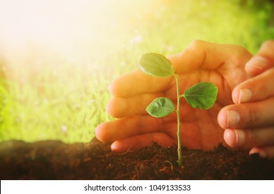 human hands are planting the young plant in the fresh ground. new start and ecology concept