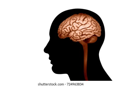 human head with brain and white background