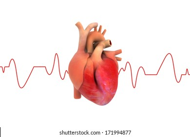 Human Heart with ECG graph