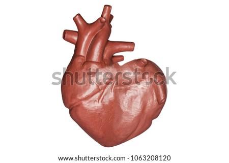 Human Heart Heart Shape Part Anatomy Stock Photo (Edit Now ...
