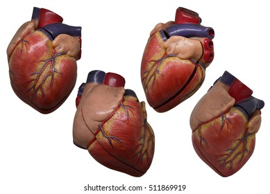 Plastic Heart Model Stock Photos, Images & Photography