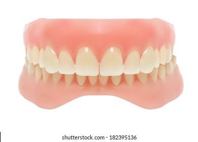 Human jaw.