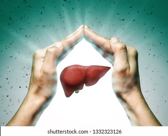 A human liver between two palms of a woman on  blue and green background. The concept of a healthy liver.
