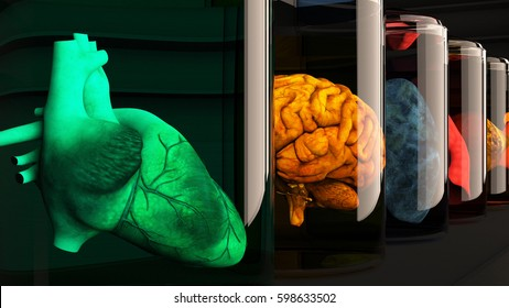 Human Organs in Science Laboratory Glasses 3D Illustration