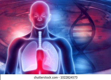 Human Respiratory System. 3d digital illustration