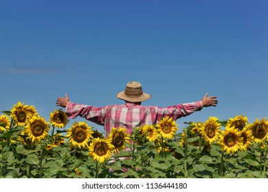 Human scarecrow in field of sunflower