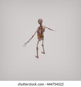 Human skeleton anotomy 3d rendering