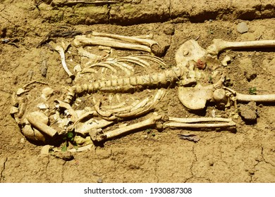 Human skeleton in an archaeological dig