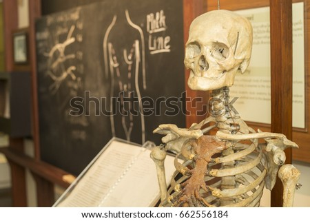Human Skeleton Class Anatomy Class Stock Photo Edit Now 662556184