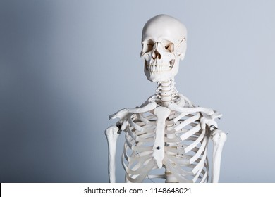 human skeleton images stock photos vectors shutterstock