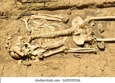 Human skeleton on an archaeological site