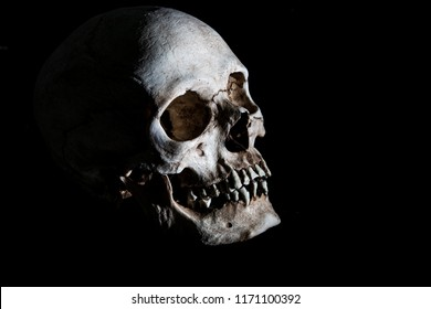 Human skeleton skull head isolated on black