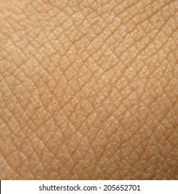 Human skin super macro texture