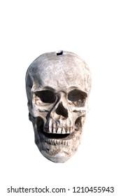 Human Skull Bank. Skull Piggy Bank. Isolated on white. Room for text. Halloween Skull Coin or change bank.