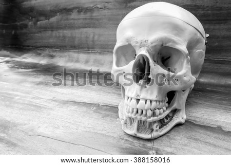 dbfaf15a22 Human Skull Black White Color Concept Stock Photo (Edit Now ...