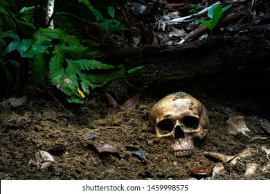 Human skull and bones with old timbers digged from the pit in the dark forest or gravyard,concept of scary crime scene of horror or thriller movies,Halloween theme, visual art ,still life style