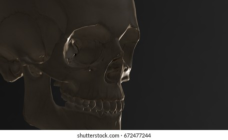 Human skull with dark background. Death, horror, anatomy and halloween symbol. 3d rendering, 3d illustration