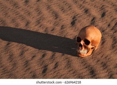 Human skull in the desert, real human skull on sand