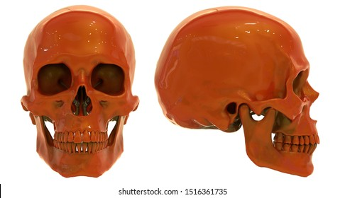 Human skull. Skull at different angles. Isolated on white background.