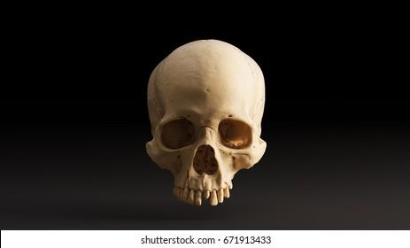Human Skull Front - skull scan SCSU VizLab thingiverse scsuvizlab CC Attribution