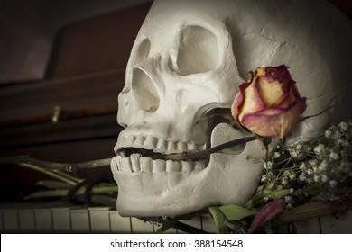 Human skull holding rose between teeth on piano